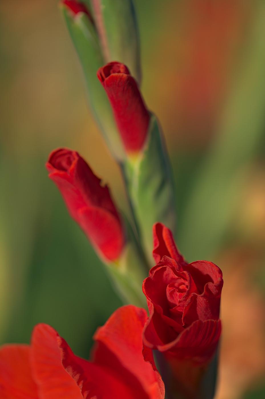 Blütenlippenstifte